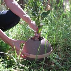 Urnas biodegradables para plantar un árbol o depositar en la tierra