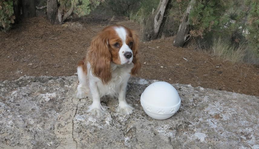 Urnas para mascotas
